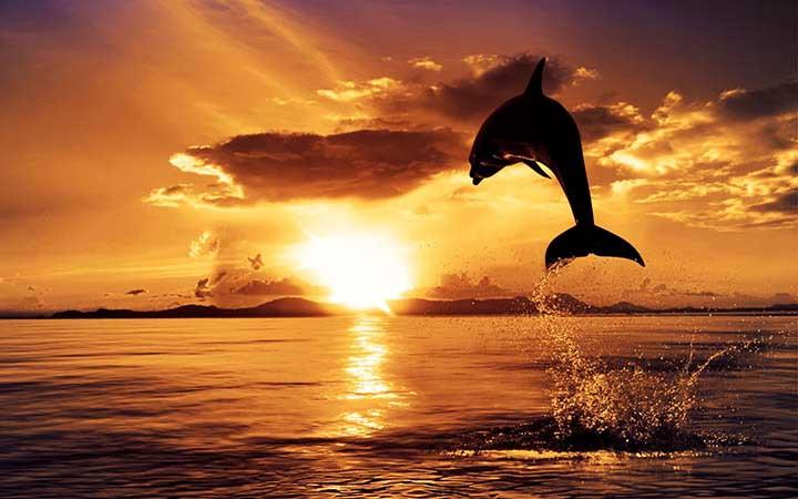 yaz resimleri içinde hayvan resimleri