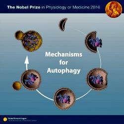 Nobel de Medicina e o melhor entendimentos sobre cancer