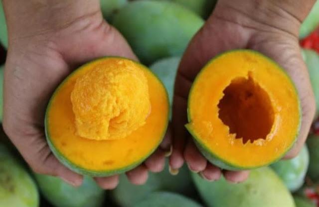 vitamin c buah mangga meningkatkan daya imun tubuh