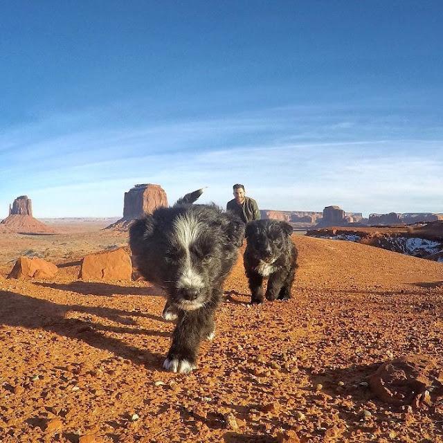 Rescató dos cachorros y se convirtieron en amigos de viaje