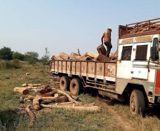 राजधानी के टाटीबंध में 10 लाख रूपए से अधिक मूल्य के खैर तथा तेंदू आदि प्रजाति के लकड़ी का गोला जब्त