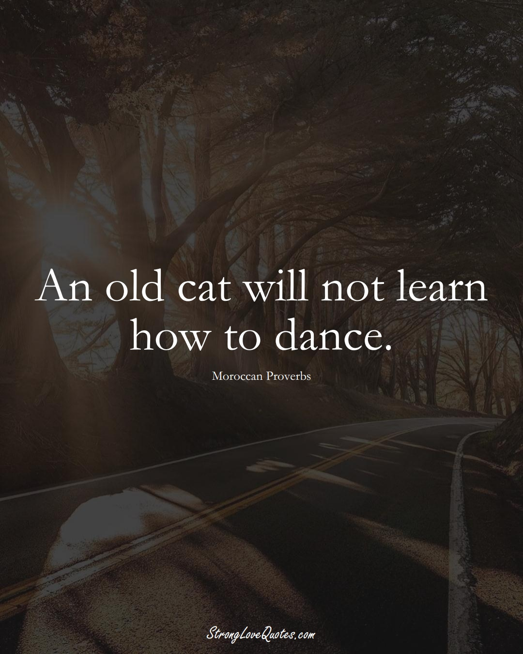 An old cat will not learn how to dance. (Moroccan Sayings);  #AfricanSayings