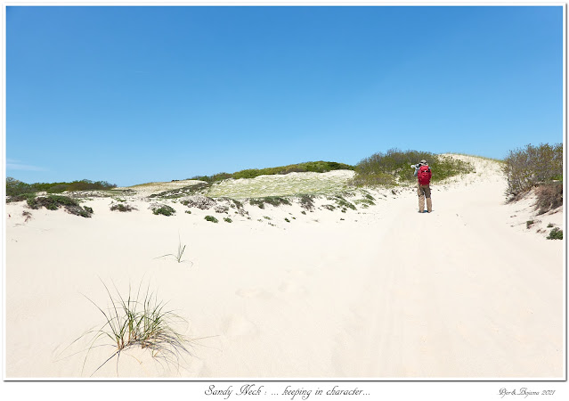 Sandy Neck: ... keeping in character...
