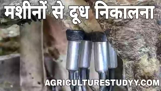 दुग्ध दोहन, milking in hindi, दुग्ध दोहन की प्रमुख विधियां एवं सिद्धांत लिखिए, गो दोहन प्रविधि क्या है, पशु का पावसना या दूध उतारना, पूर्ण हस्त विधि,