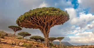 شجرة دم الأخوين: مكان مقتل هابيل ابن ادم عليه السلام؟