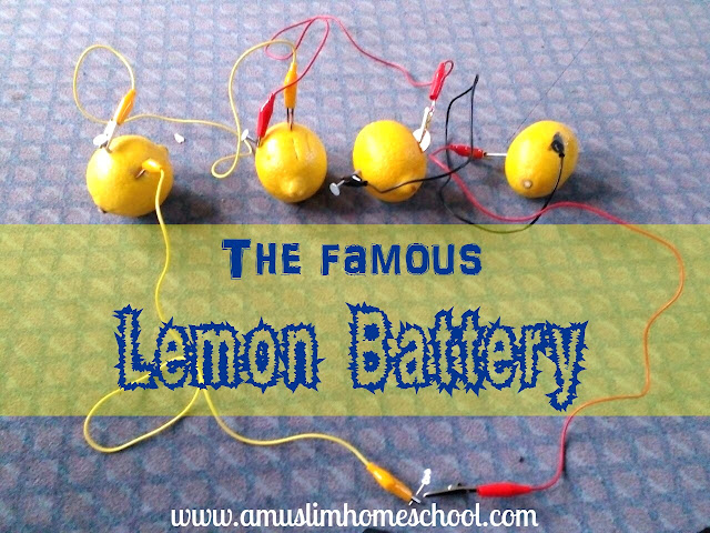 Lemon battery experiment for kids