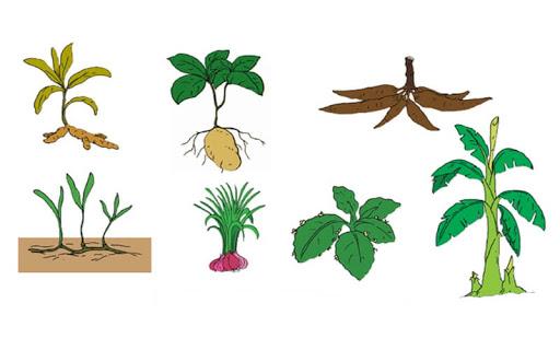 perkembangbiakan tumbuhan secara generatif dan vegetatif