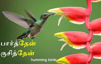 humming birds_heliconia