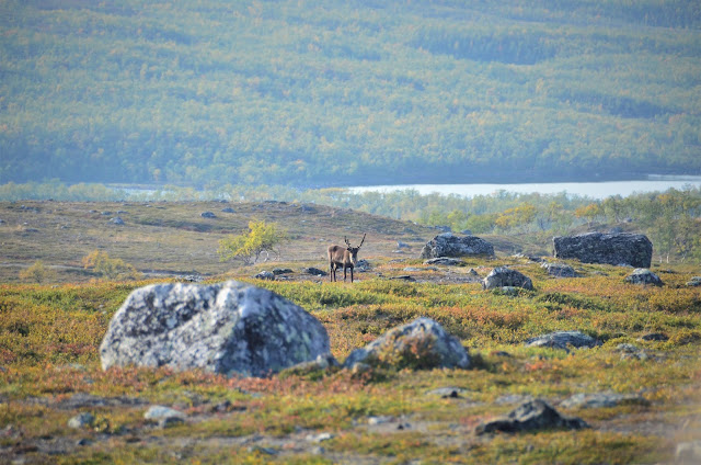 Warming temperatures are driving arctic greening