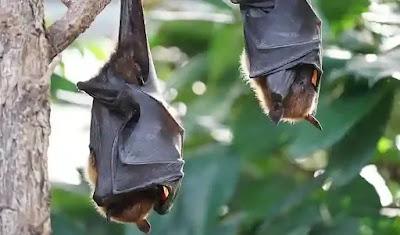 تفسير الخفاش في الحلم للامام الصادق