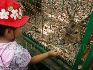 Tiket Masuk Kebun Binatang Bandung