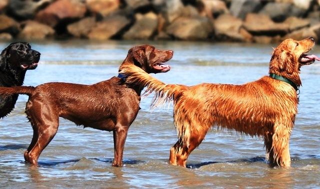 Nομοσχέδιο εξαφάνισης σκύλων