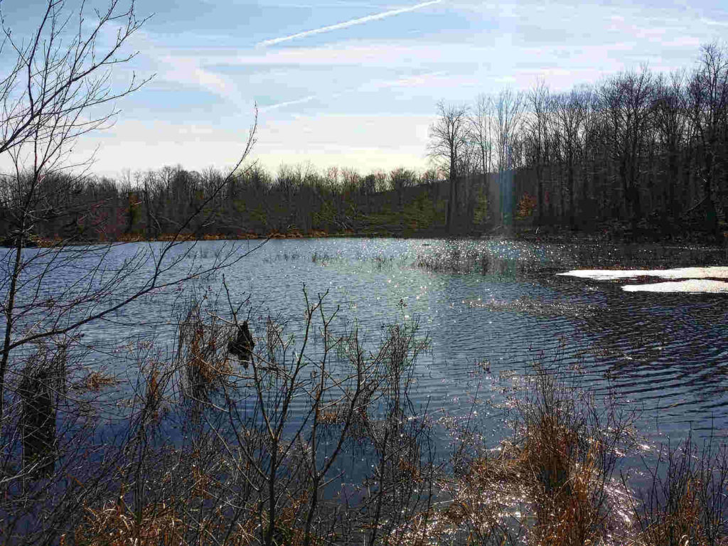 Beaver Pond Trail -- Spring