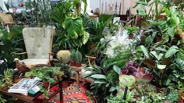 Inspiración y plantas de interior en RHS Urban Garden Show