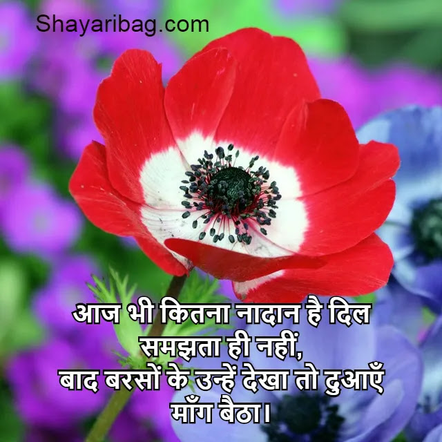 Love Shayari Image For Status