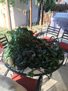 Patio table full of kale, chard, spinach, with a melon