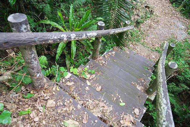 forest, trail, stairway, handrails, Okinawa