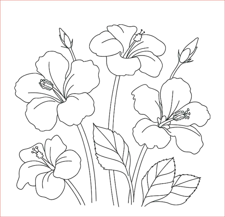 Gambar Mewarnai Bunga Sakura Sketsa Lukisan Tulip Di