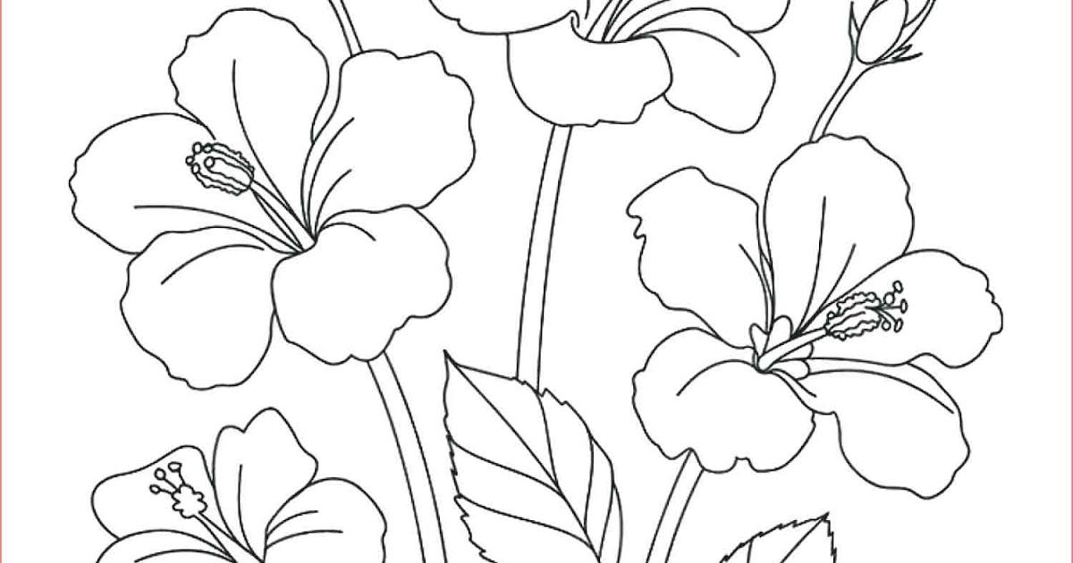 Sketsa Gambar Pemandangan Flora Dan Fauna