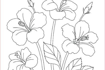 30+ Gambar Sketsa Bunga Mudah   Bunga Matahari, Mawar, Tulip, Sakura, Teratai, Sepatu, Melati, dll
