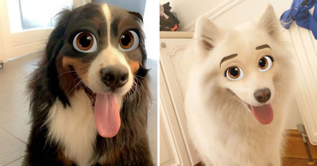 This New Snapchat Filter Will Transform Your Dog Into A Disney Character