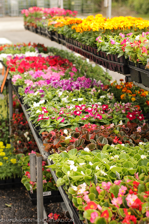 buying gorgeous flowers for potted plants at True Value
