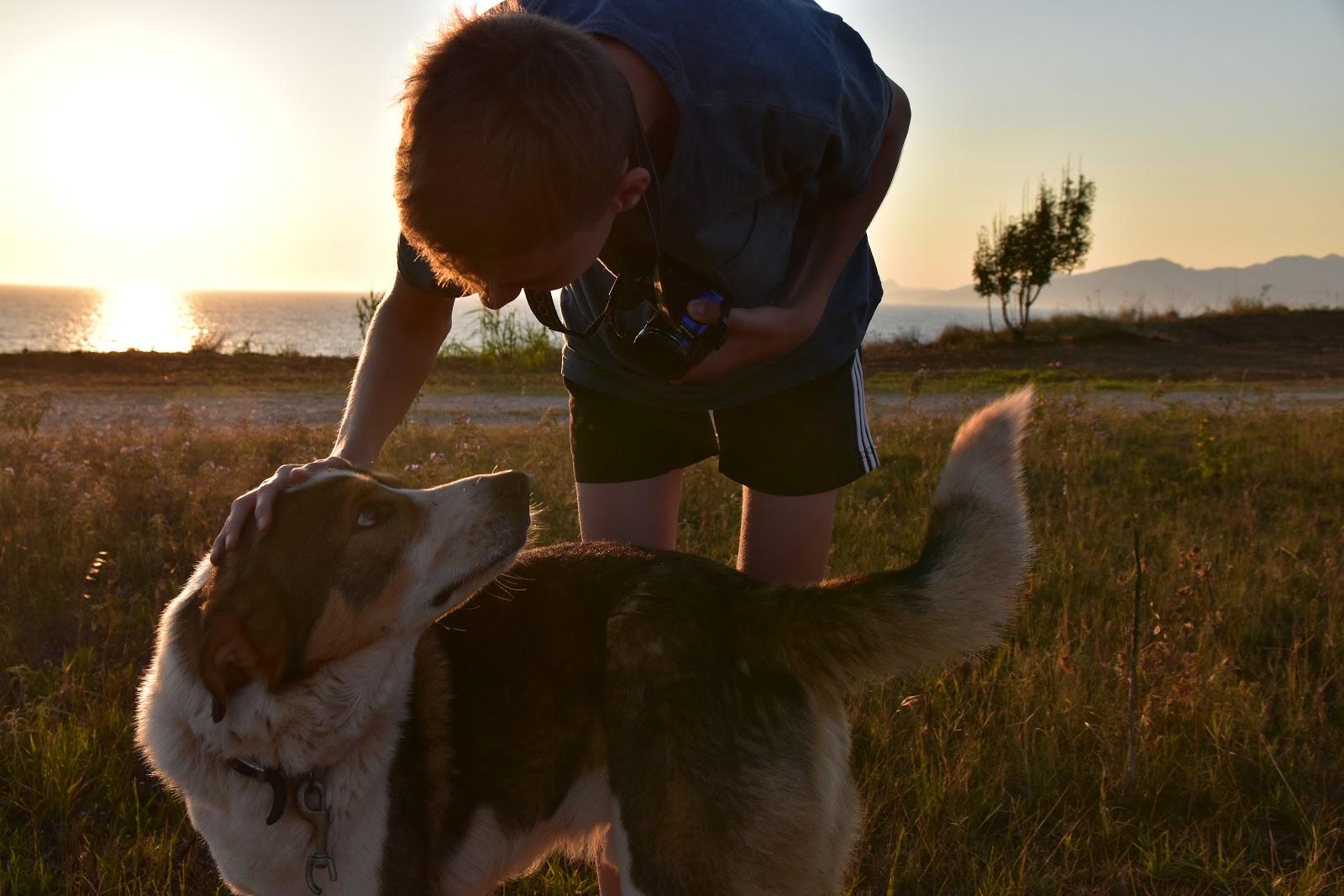toulaví psi v Řecku