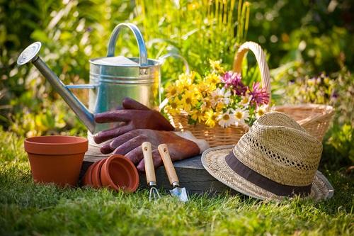 Manfaat Berkebun sangat baik untuk Kesehatan Tubuh
