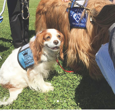 Therapy Dogs De-Stressing Students at the University