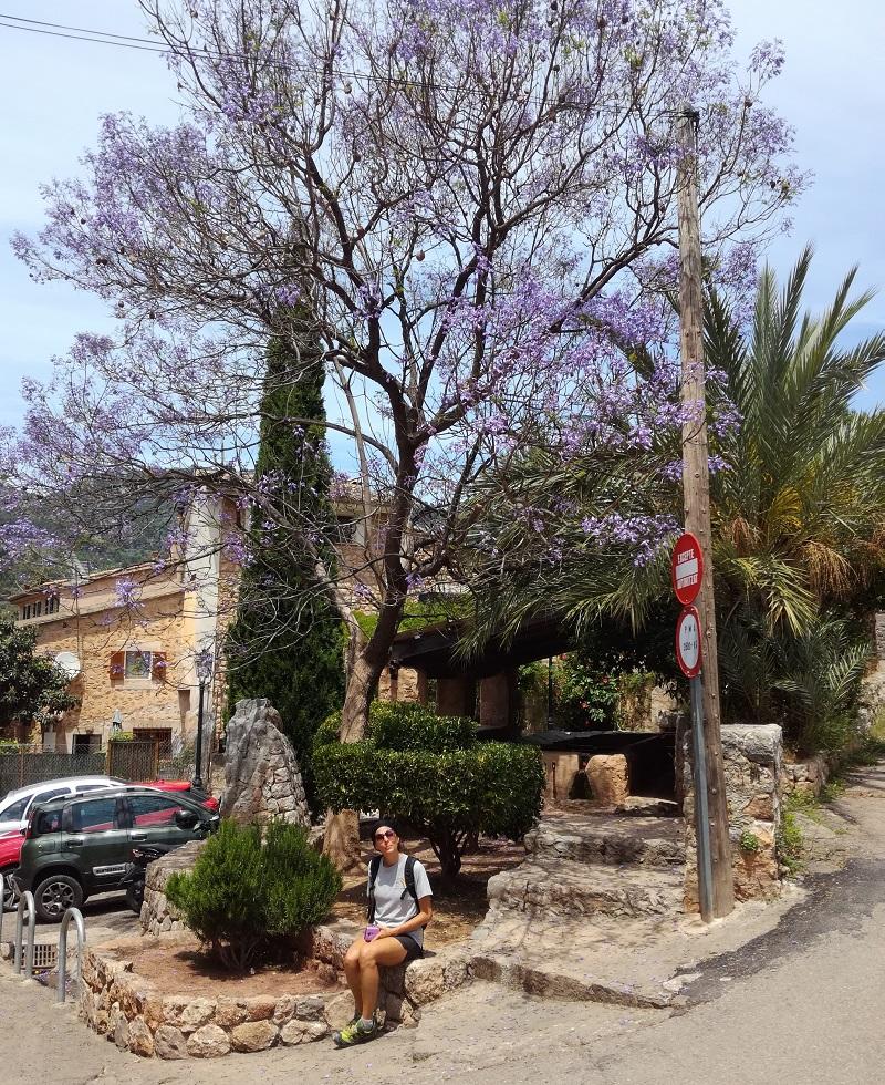 Al lavatoio di Biniaraix sotto un albero di Jacaranda