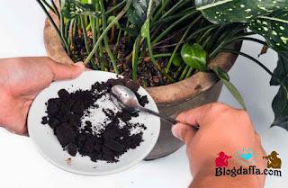 6 Limbah dapur yang bisa dijadikan pupuk organik
