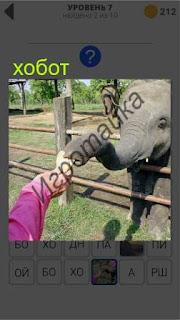 слон через ограждение принимает угощение от людей 7 уровень 400+ слов 2