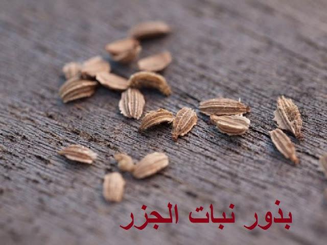 بذور الجزر carrots seeds