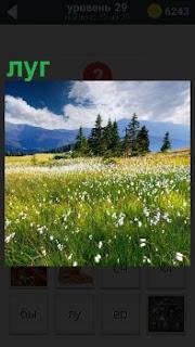 Под синем небом с облаками луг, на котором растут различные красивые цветы и высокая трава