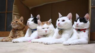Hay 5 tipos de personalidad felina: ¿cómo es la personalidad de tu gato?