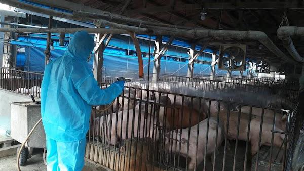 彰化查送8件非洲豬瘟產品 2陽性下架、4陰性、2檢驗中