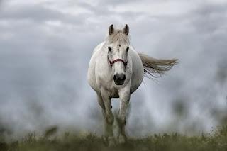 تفسير حلم رؤية الحصان في المنام
