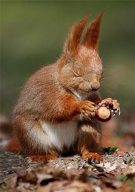 yoda squirrel