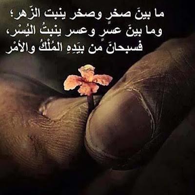 ما بيض صخر وصخر ينبت الزهر