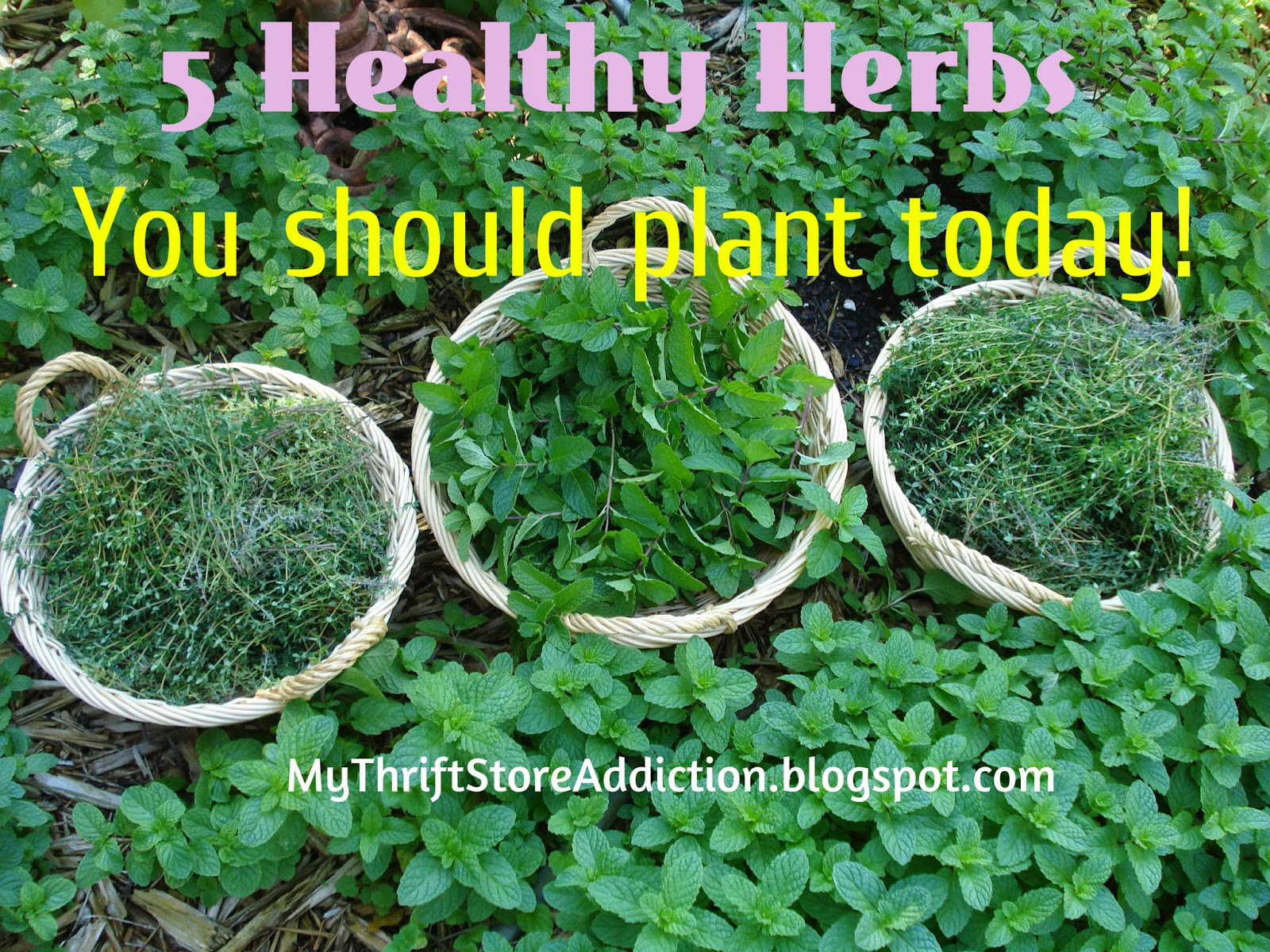 Why to plant herbs