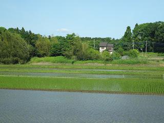 水田 Paddy field