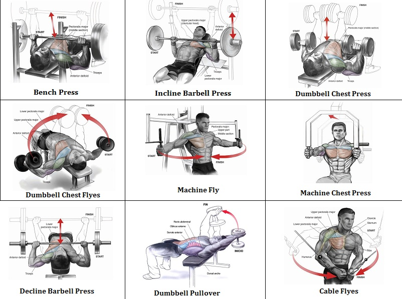 Best workout chest routine exercise your once a
