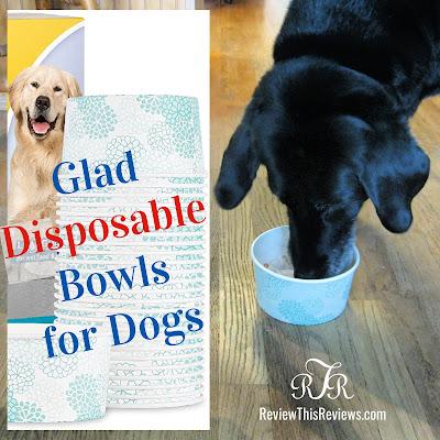 Disposable Dog Bowls
