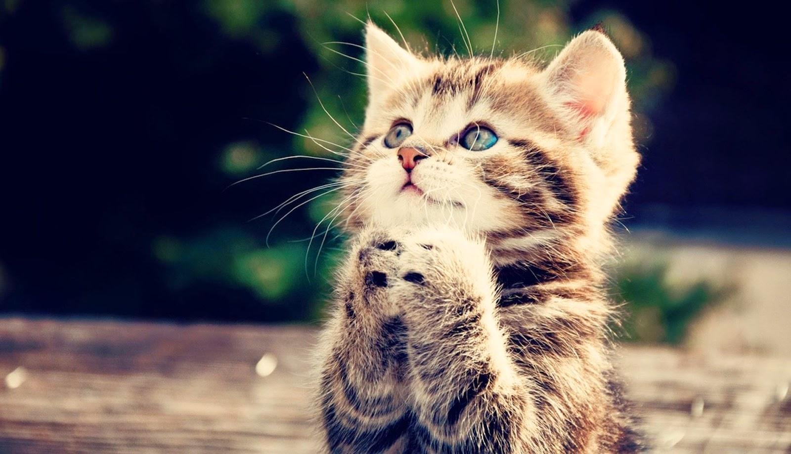 tierische freunde lustige katzen