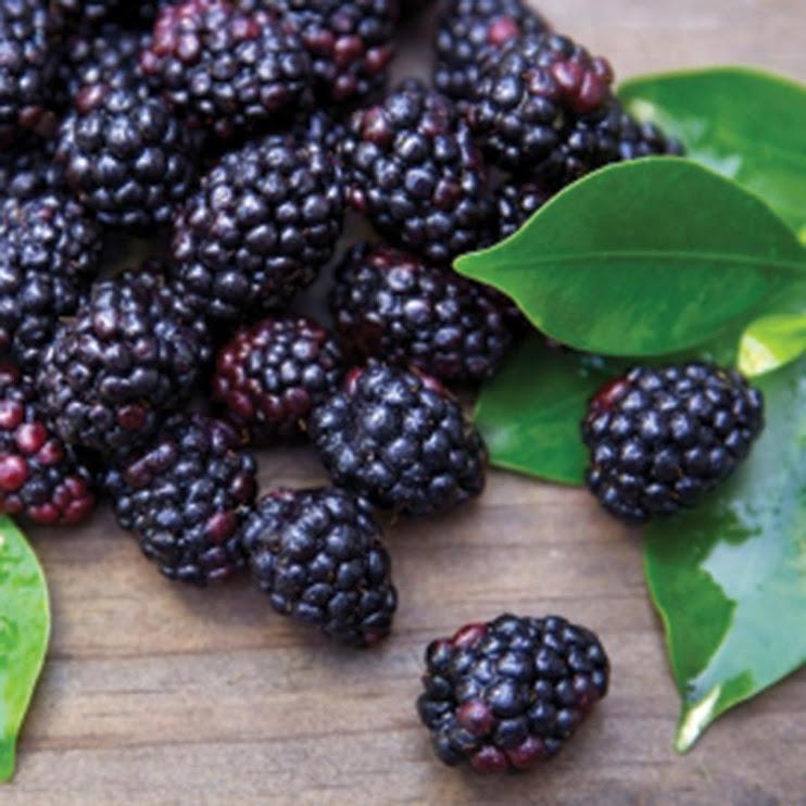 Benih Bibit Biji Buah Black Raspberry Import Benih Unggul isi 10 pcs Tangerang