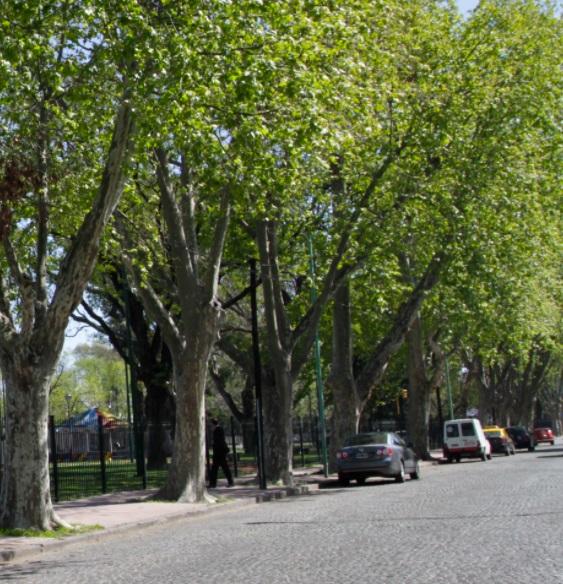 Los Arboles de la Ciudad de Buenos Aires