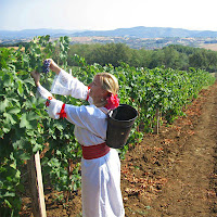 Bulgarian vineyard worker