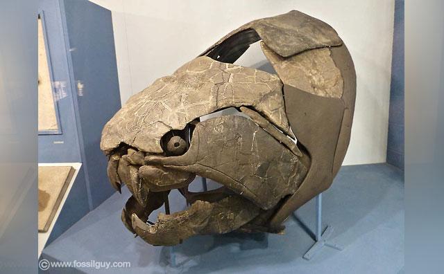 Fosil Dunkleosteus