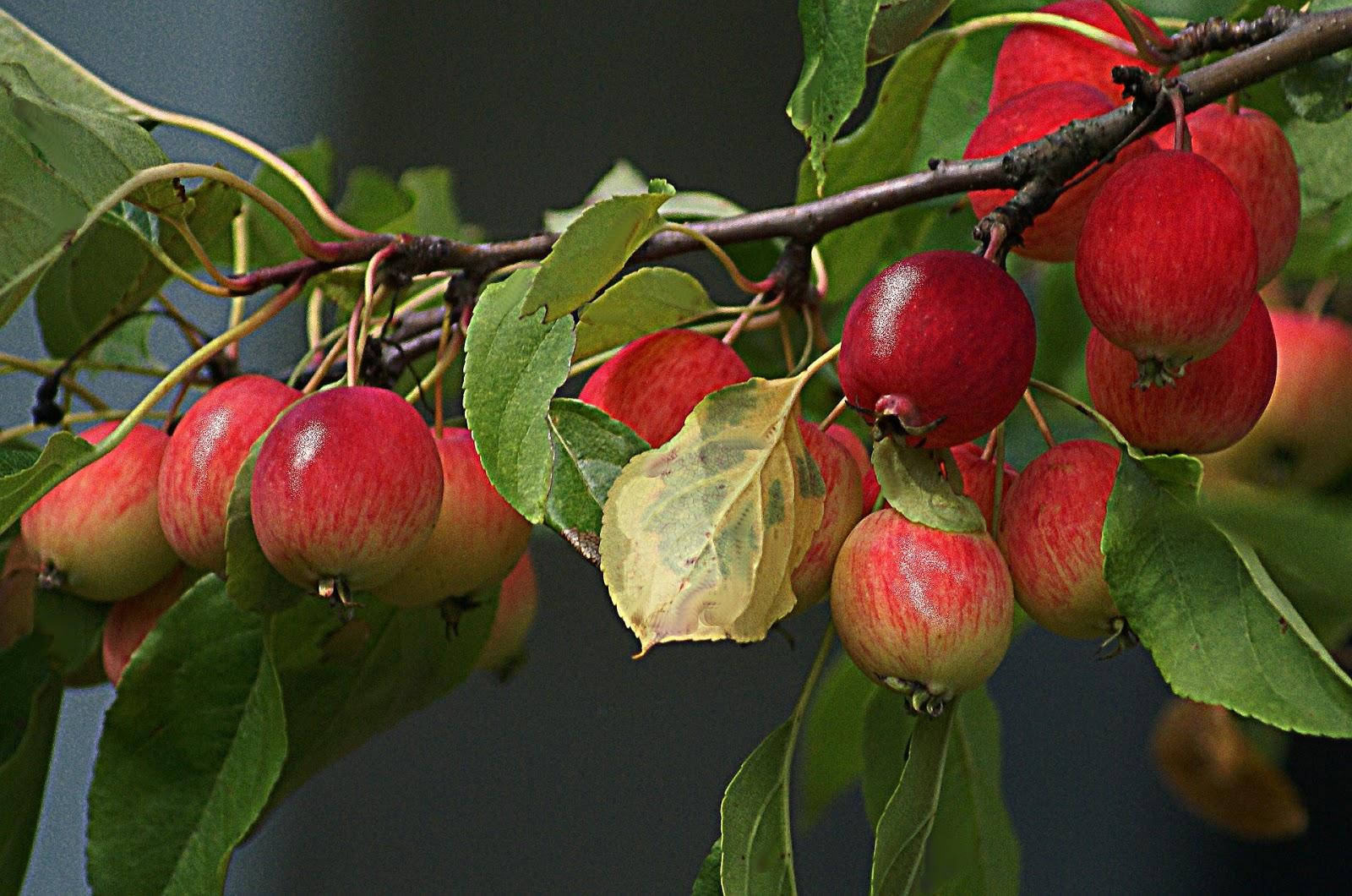 éclaircissage fruits