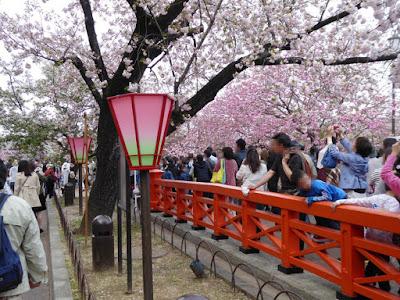大阪造幣局 桜の通り抜け めがね橋
